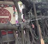 templemop